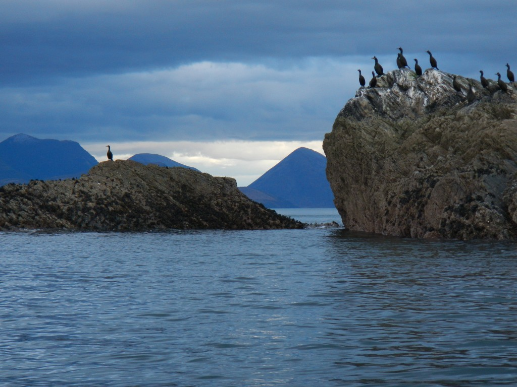 The Skye Cuillin and seabirds