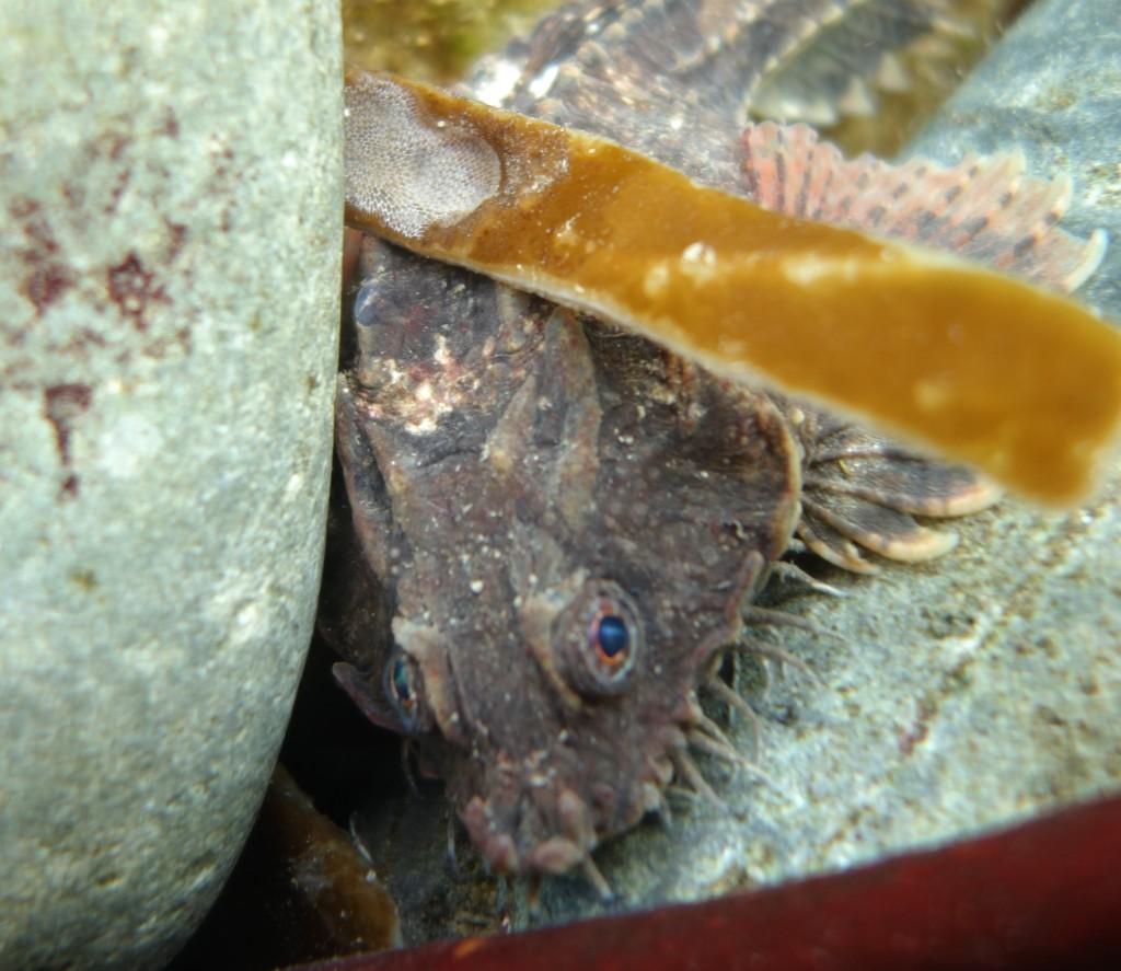 Pogge fish, Torrin, Isle of Skye