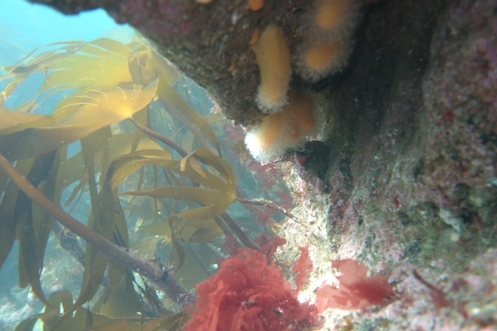 Under the seas around Skye