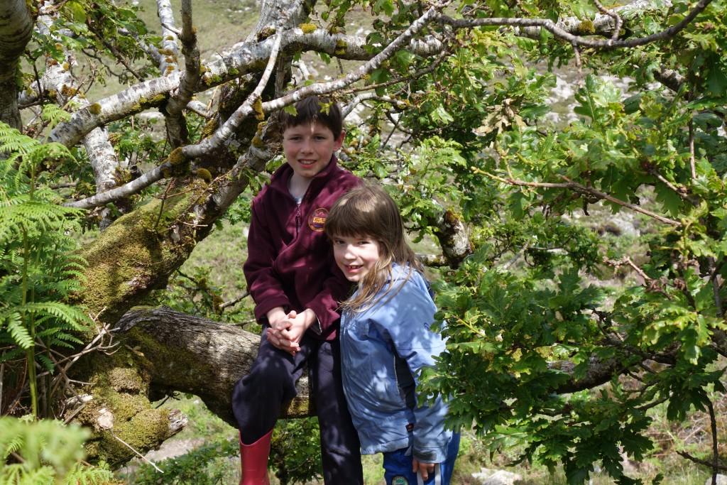 Oak tree near Camas Darach