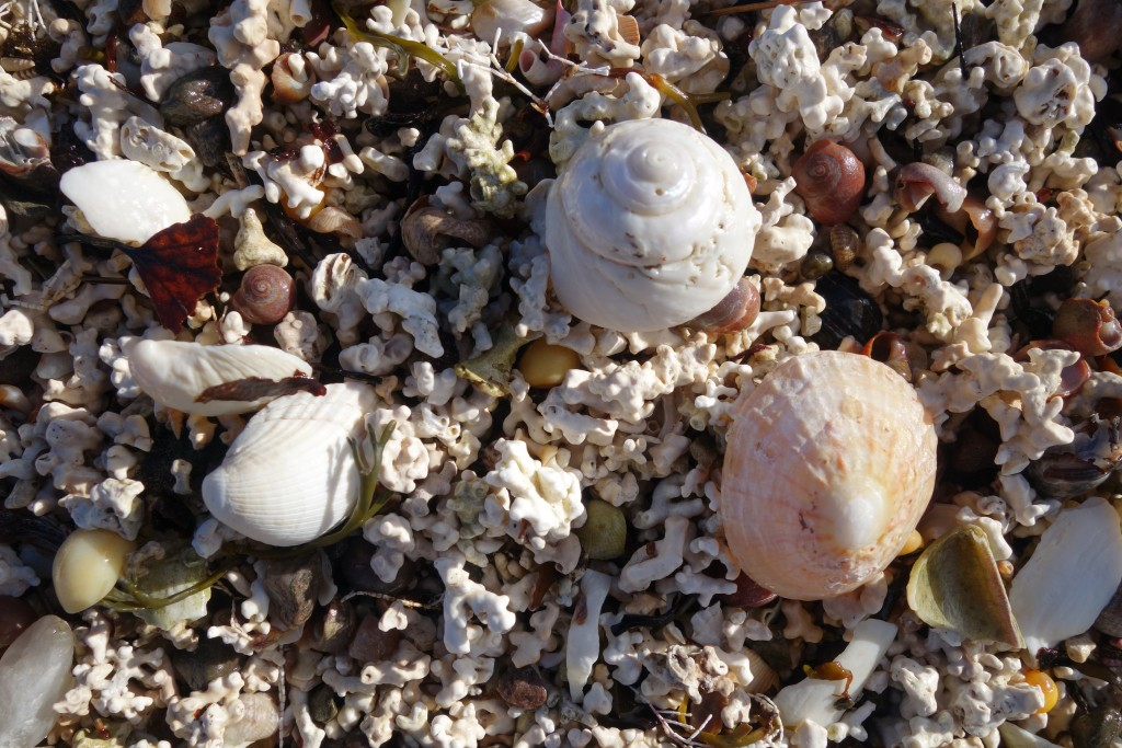 Shells on a Skye beach