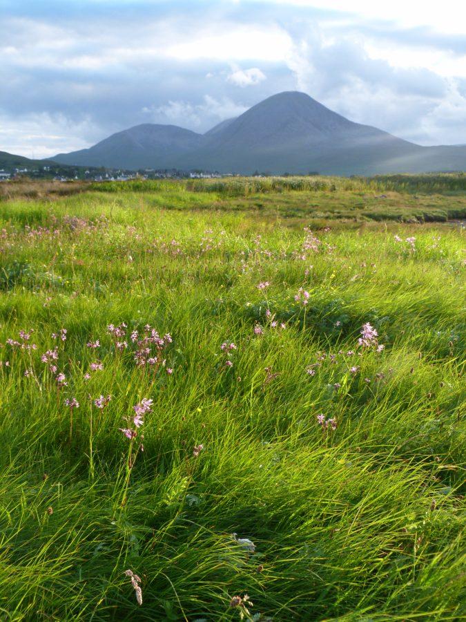 Wild flowers on Skye